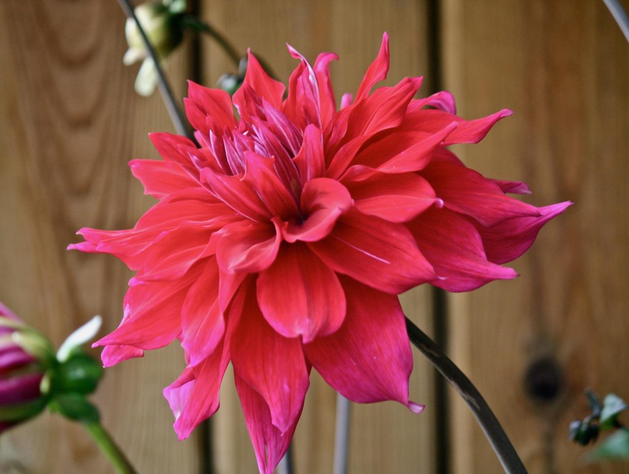 Flower Photography Little London Observationist