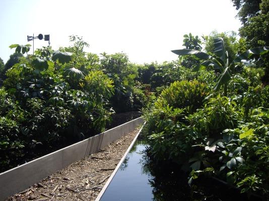 A valley garden